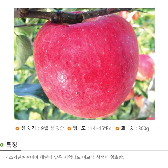 201701_경산묘목_홍로.jpg