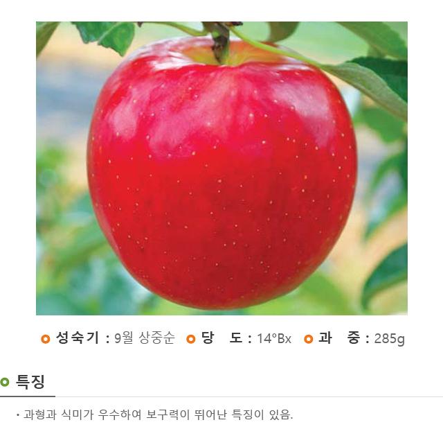 201701_경산묘목_아리수.jpg